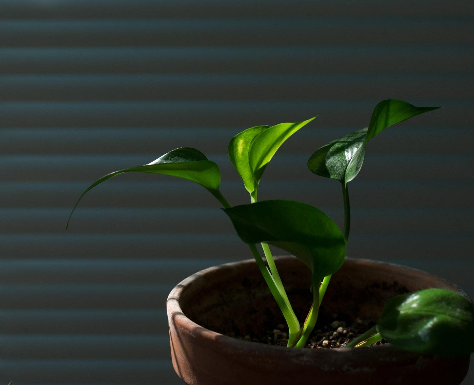 A plant symoblising the peace and calm therapy and counselling can bring